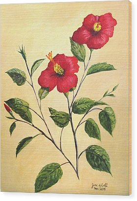 Red Hibiscus Wood Print by June Holwell