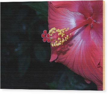 Wood Print featuring the photograph Red Hibiscus by Ron Davidson