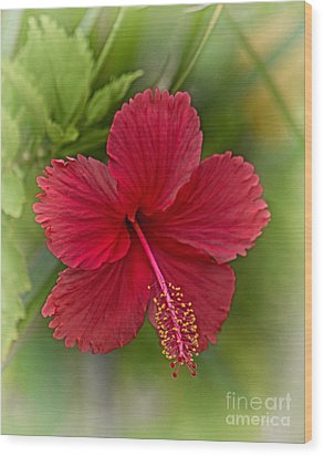 Red Hibiscus Wood Print by Wendy Townrow