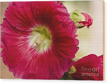Wood Print featuring the photograph Red Hollyhock Althaea Rosea by Sue Smith