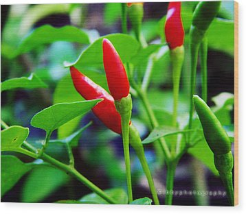 Red Hot.. Chillis Wood Print by Ibrahim Mat Nor