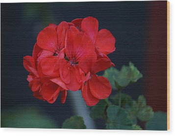 Red Is My Blossom Wood Print by Thomas D McManus