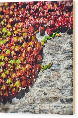 Wood Print featuring the photograph Red Ivy On Wall by Silvia Ganora