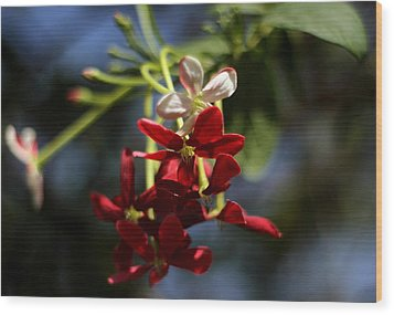 Wood Print featuring the photograph Red Jasmine Blossom by Ramabhadran Thirupattur