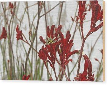 Red Kangaroo Paw Wood Print by Ben and Raisa Gertsberg