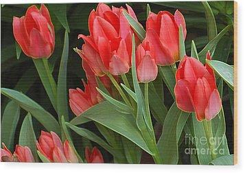 Red Ladies Wood Print by Kathleen Struckle