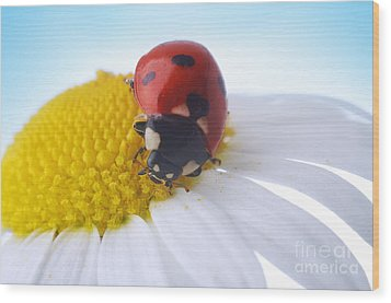 Red Ladybug Wood Print by Boon Mee