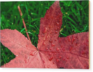 Red Leaf Wood Print by Crystal Hoeveler