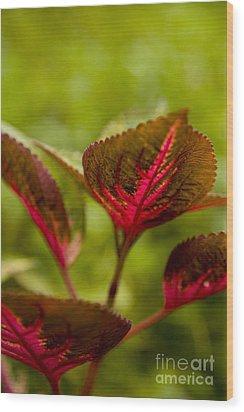 Red Leaf Wood Print by Thomas Levine