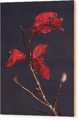 Red Leaves And Fading Moon Wood Print