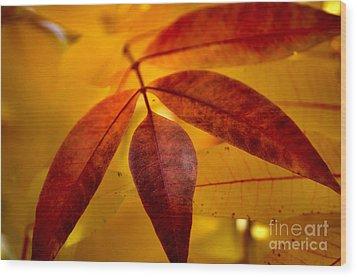 Red Leaves At Dawn Wood Print by Deb Halloran