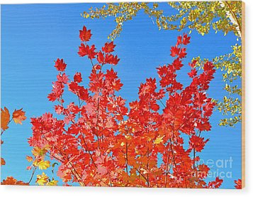 Wood Print featuring the photograph Red Leaves by David Lawson