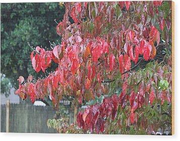 Red Leaves In The Rain Wood Print by Carolyn Ricks
