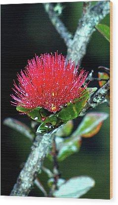 Red Lehua  Kawaiko'olihilihiokalikolehua Wood Print