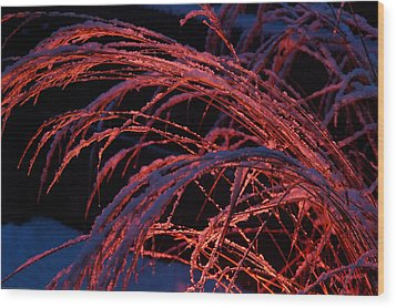 Red Light In Snow-heavy Grass Wood Print by Mick Anderson