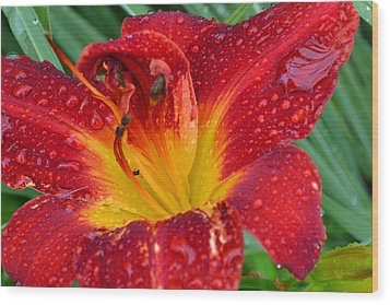 Red Lily After The Rain Wood Print
