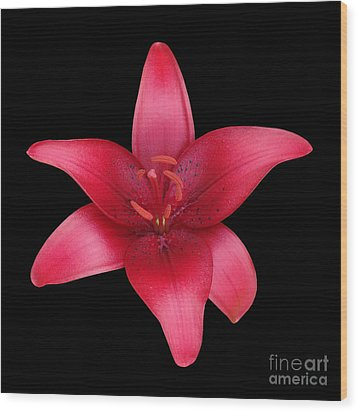 Wood Print featuring the photograph Red Lily by Judy Whitton
