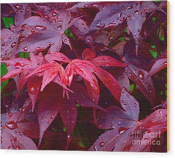 Wood Print featuring the photograph Red Maple After Rain by Ann Horn