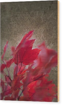Red Maple Dreams Wood Print