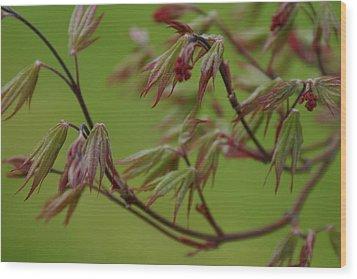 Red Maple Wood Print by Kelly Hazel