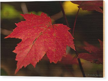Red Maple Leaf In Fall Wood Print by Brenda Jacobs