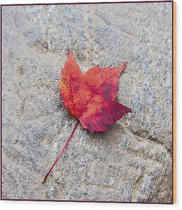 Red Maple Leaf On Granite Stone In A Square Format Wood Print by Karen Stephenson