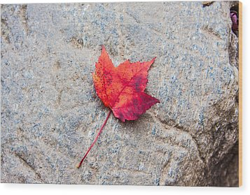 Red Maple Leaf On Granite Stone In Horizontal Format Wood Print by Karen Stephenson