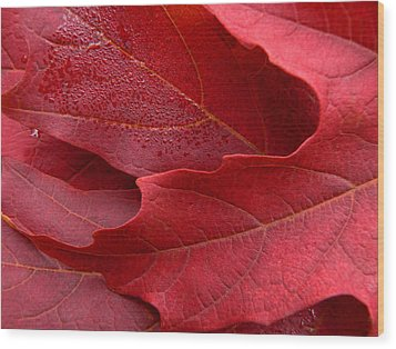 Red Maple Leaves Wood Print by Jennie Marie Schell