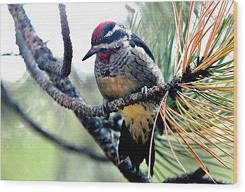 Red-naped Sapsucker On Pine Tree Wood Print