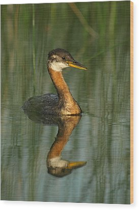 Wood Print featuring the photograph Red-necked Grebe by James Peterson