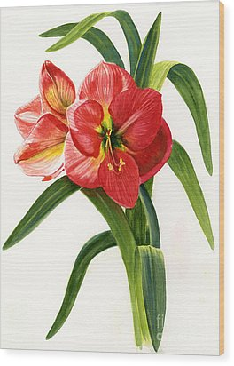 Red-orange Amaryllis Wood Print by Sharon Freeman