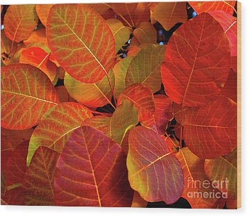 Wood Print featuring the photograph Red Orange Leaves by Charles Lupica