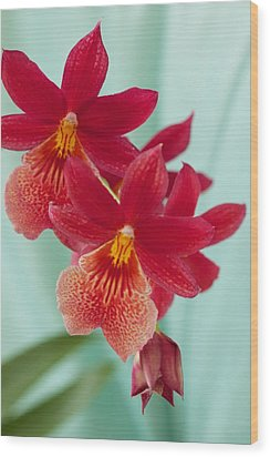 Red Orchids On Blue Wood Print by Bonita Hensley