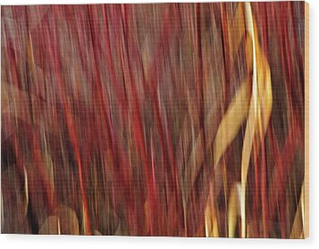 Red Osier Dogwood Wood Print by Theresa Tahara