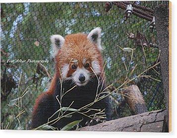 Red Panda Wood Print by Jade Thomas