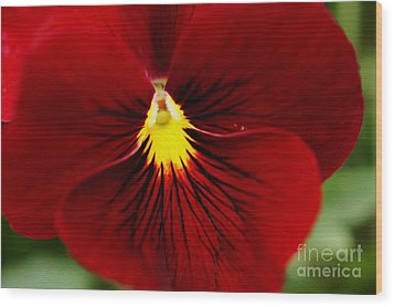 Red Pansy Wood Print by Nur Roy