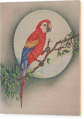 Wood Print featuring the drawing Red Parrot by Ethel Quelland