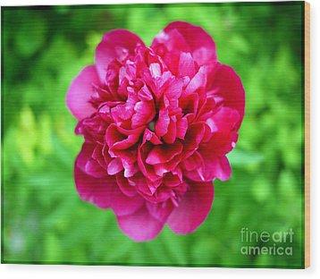 Red Peony Flower Wood Print by Edward Fielding