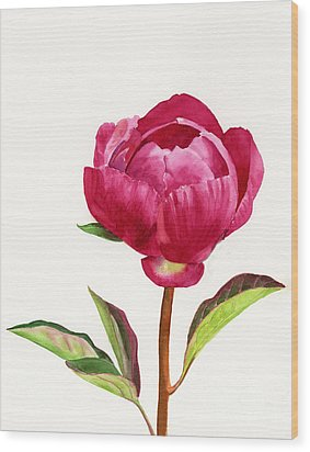 Red Peony With Leaves Wood Print by Sharon Freeman