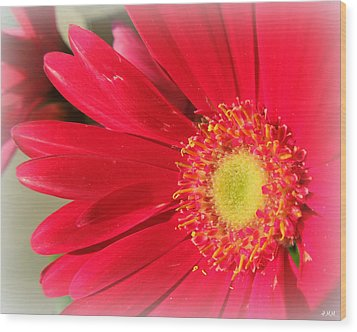 Red Petaled Gerbera Wood Print by Heidi Manly
