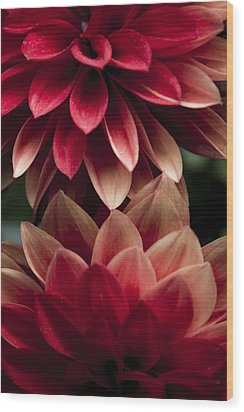 Red Petals Wood Print by Glenn DiPaola