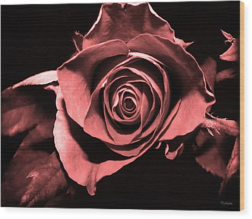 Red Pink Rose  Wood Print by Yvon van der Wijk