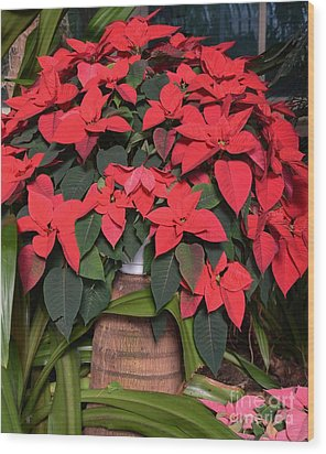 Red Poinsettia Wood Print by Kathleen Struckle