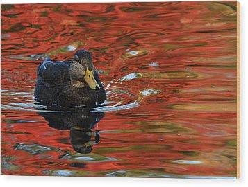 Red Pond Wood Print by Karol Livote