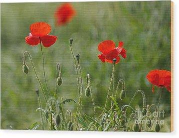 Red Poppies 2 Wood Print by Carol Lynch