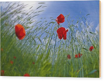 Red Poppies And Blue Sky Wood Print by Melanie Viola