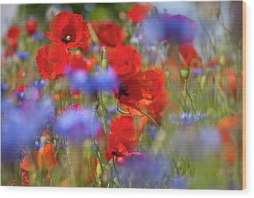 Red Poppies In The Maedow Wood Print by Heiko Koehrer-Wagner
