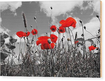 Red Poppies On Black And White Background Wood Print by Dany Lison