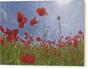 Red Poppy And Sunrays Wood Print by Melanie Viola