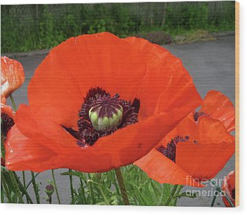 Wood Print featuring the photograph Red Poppy by Barbara Griffin